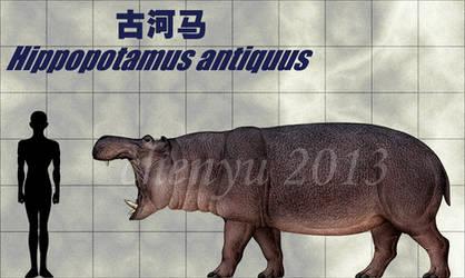 Hippopotamus antiquus