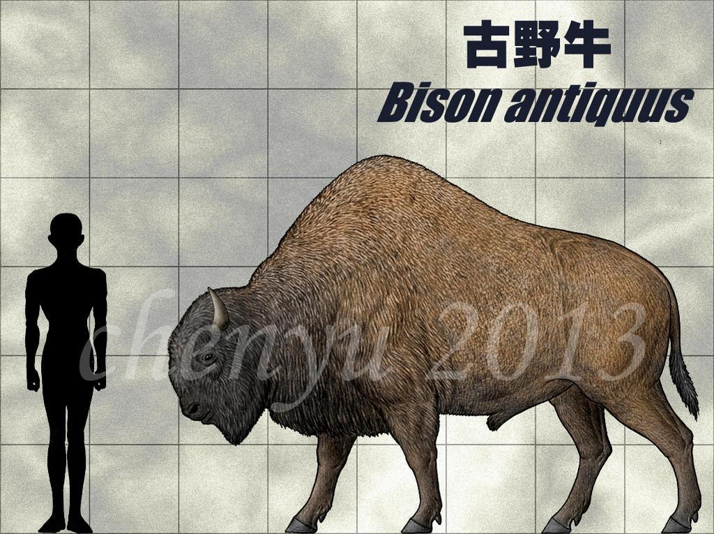 Bison antiquus wiki - photo#15