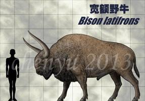 Bison latifrons by sinammonite