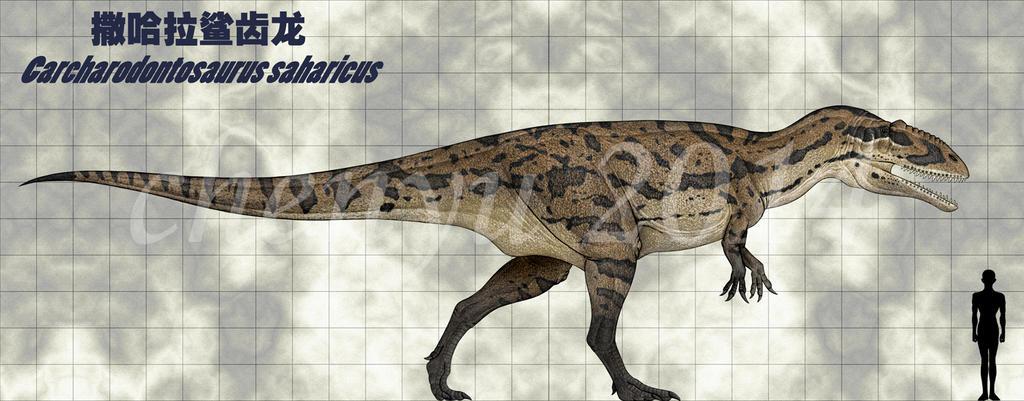 Carcharodontosaurus saharicus by sinammonite