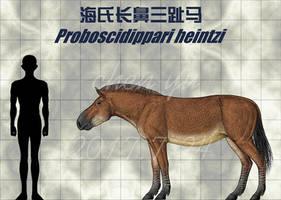 Proboscidippari heintzi
