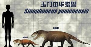 Sinophoneus yumenensis