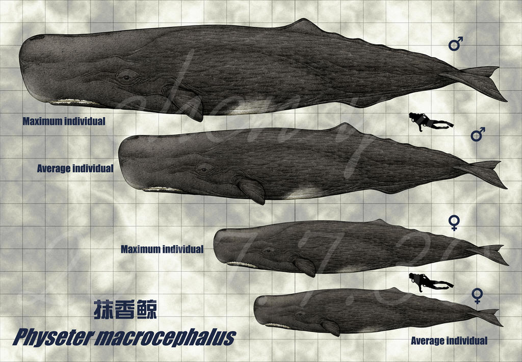 Resultado de imagem para sinammonite sperm whale