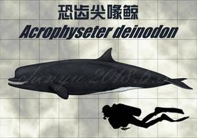 Acrophyseter deinodon