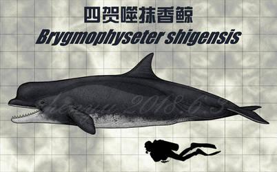Brygmophyseter shigensis