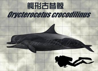 Orycterocetus crocodilinus
