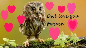 Owl love you forever card by gabrielle44
