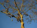 Shoe tree by BromeliaCarnivora