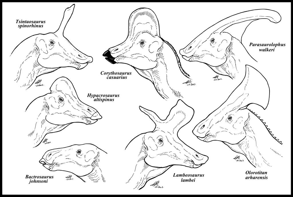 Lambeosaurinae_by_zakafreakarama.png