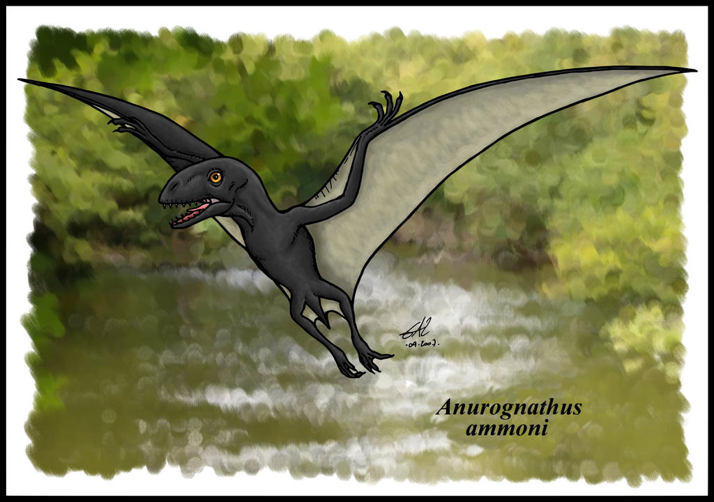 Anurognathus by zakafreakarama