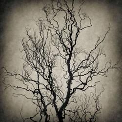 Dead Tree by yume-no-yukari-photo