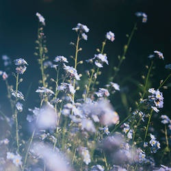 Night Flowers by yume-no-yukari-photo