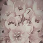 Spring Mood by yume-no-yukari-photo