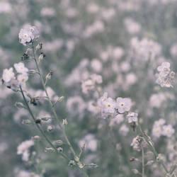 Summer Daydream by yume-no-yukari-photo