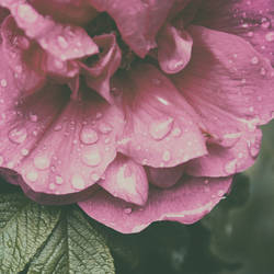 Rainy Summer Ends With Rain by yume-no-yukari-photo