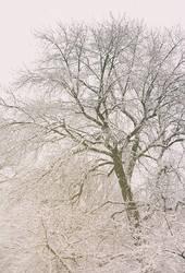 Snowy by yume-no-yukari-photo