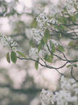 White Melancholy by yume-no-yukari-photo