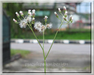 .: Flower Power :. by pucukpaku