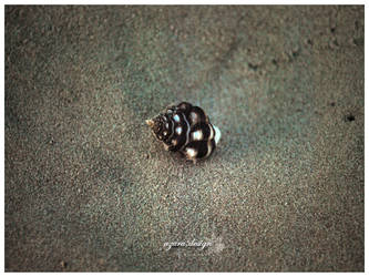 Lonely Snail