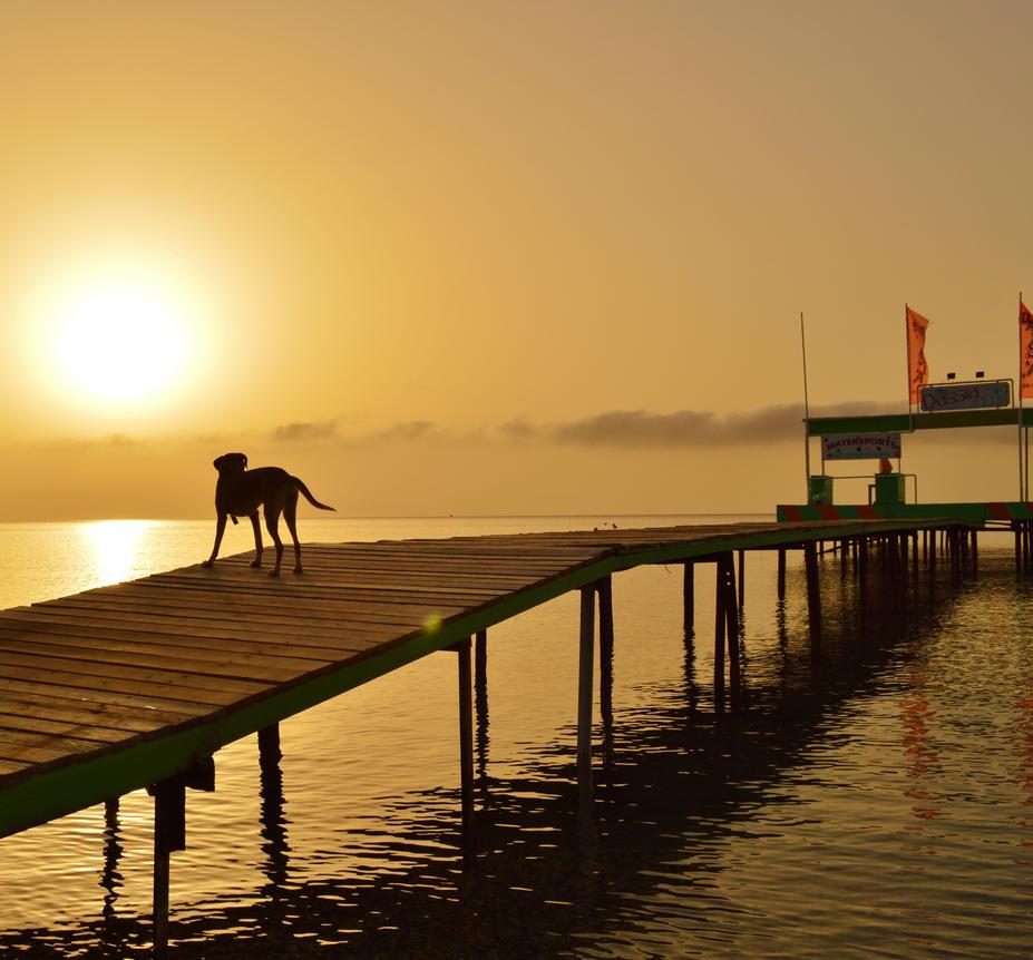 Dassia dog at dawn 4 by melrissbrook