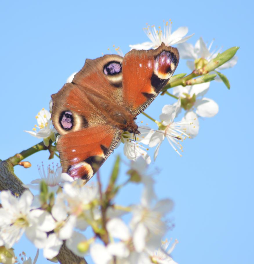 Butterflies 2014 2 3 by melrissbrook