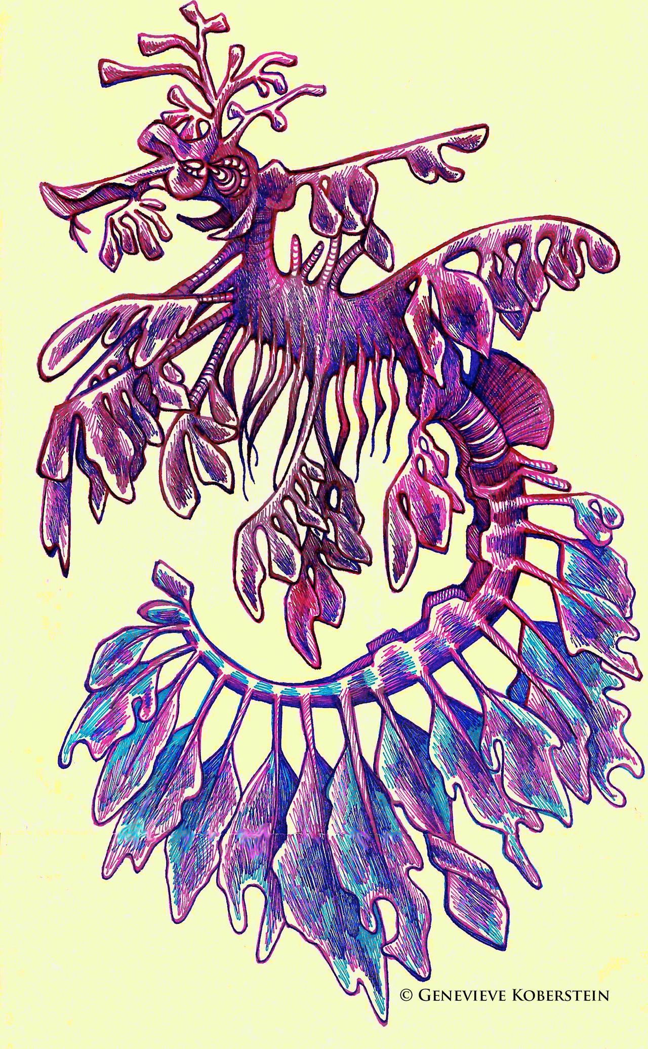 Leafy sea dragon by honey-art on DeviantArt