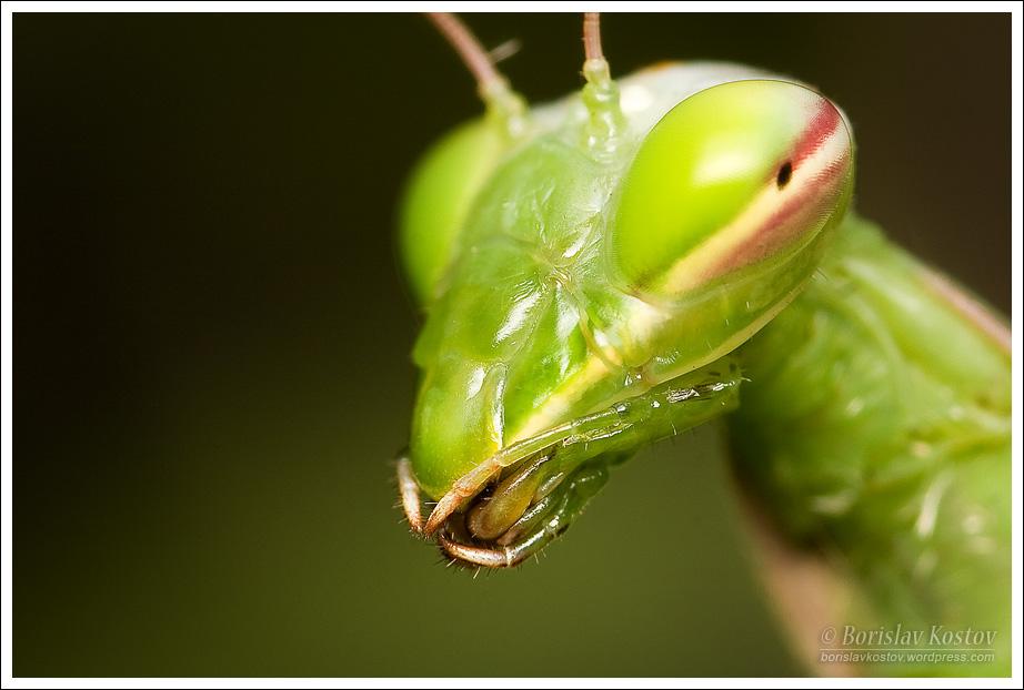 Praying Mantis 2 V by Deformity on DeviantArt