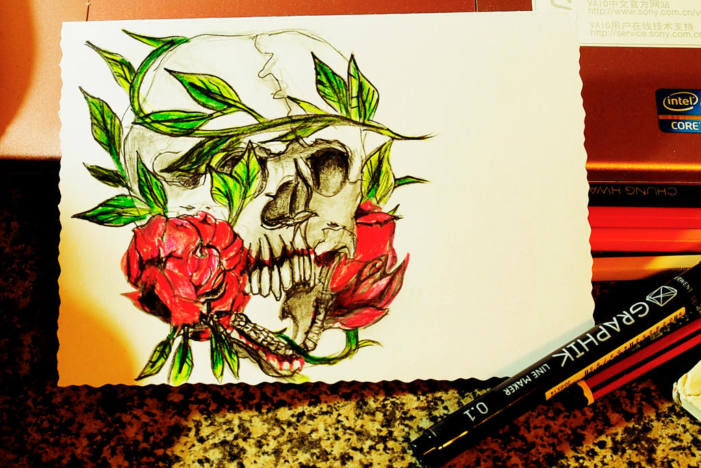 Drawing skull by FWEI13