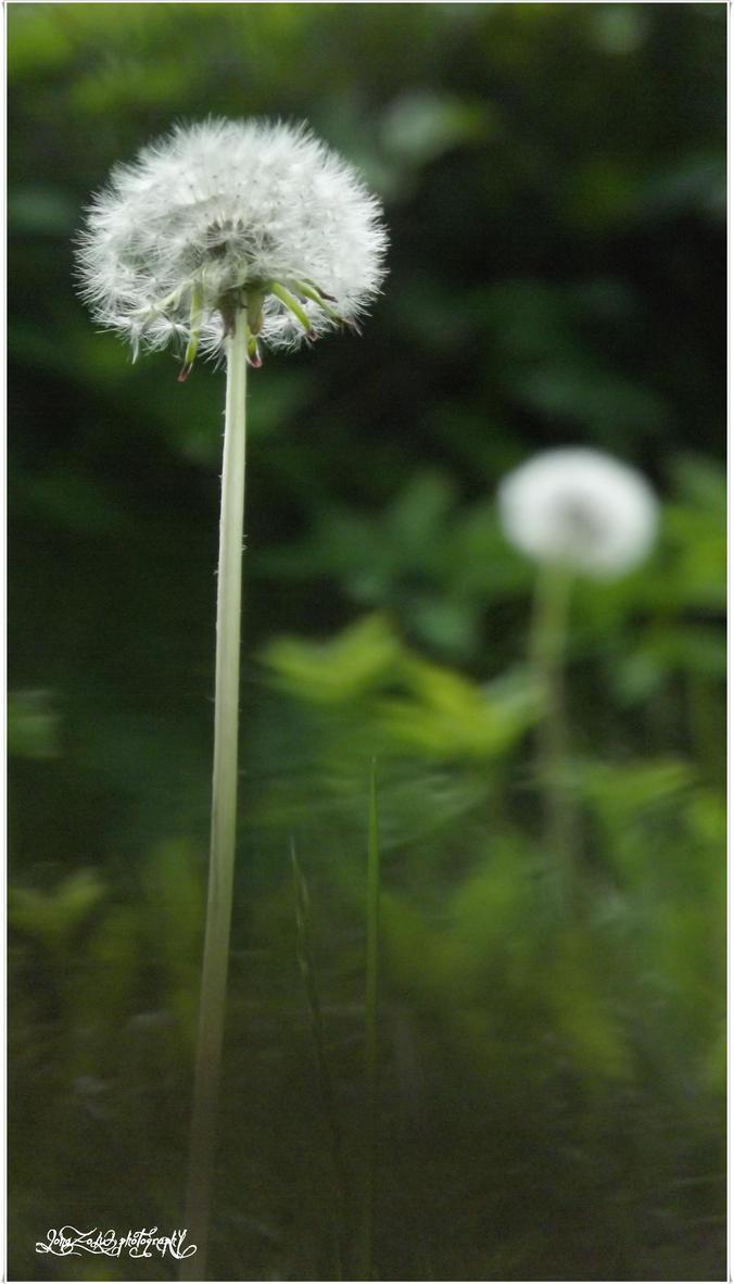Natura by JonaZoLW
