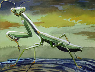 Praying Mantis by Kilsley