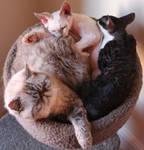 Cat Spiral by Clockwork7