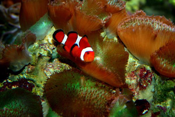 Nemo by rememberthename