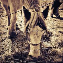 Wild Horses by AndrewNickson