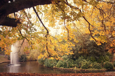 Autumn Leaves by AndrewNickson