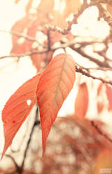 Leaves of Autumn by AndrewNickson