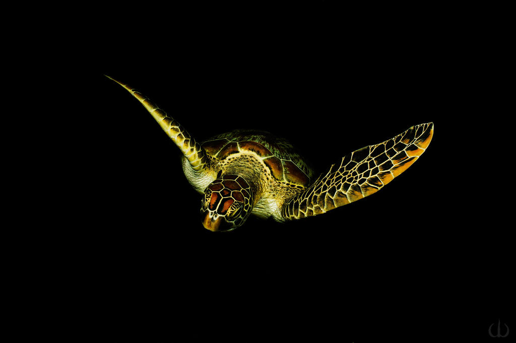 Awesome turtle by Holophite