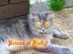 Beware of Fluffy
