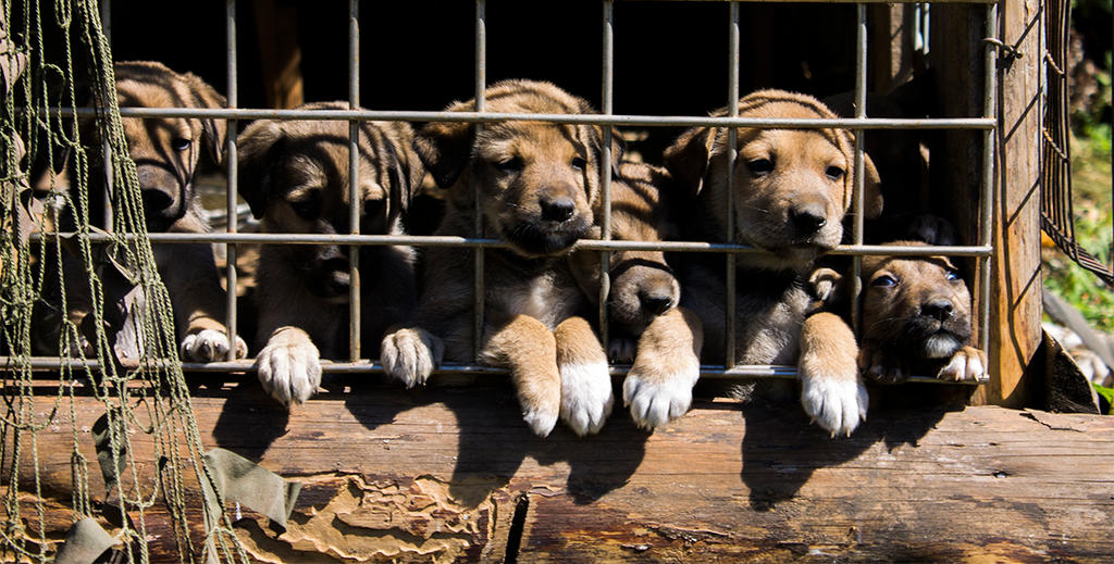 GrowingPuppies by Letiso