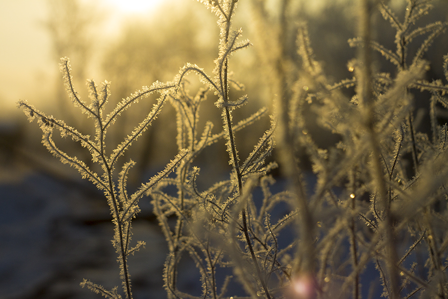 FrostyMorn by Letiso