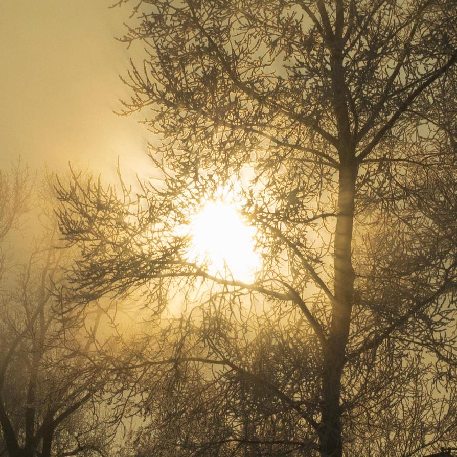 FoggySun by Letiso