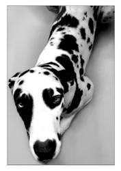 Zurk the dog by Paula-Rosa