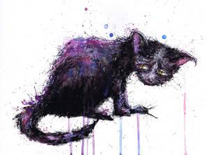 stray cat by AlmostButNotQuite