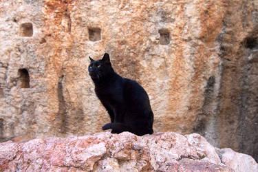 Cat II by Delacorr