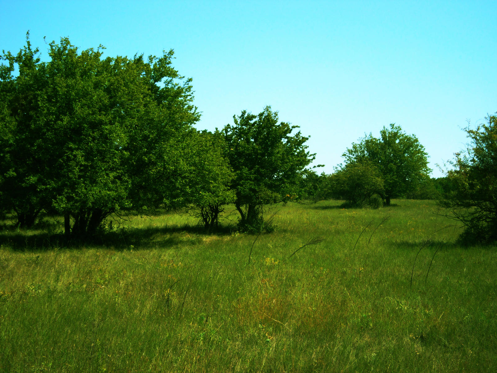 Grassy Fields by nirnaet on deviantART