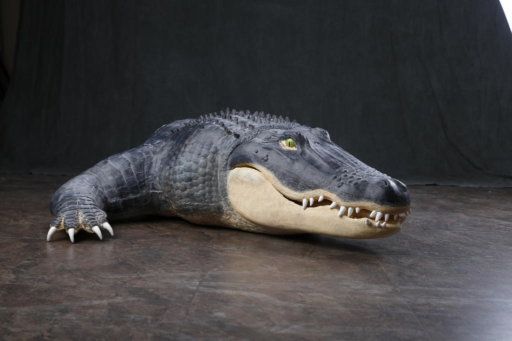 Alligator bust prop by ShaggyGriffon