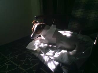Piccolo raggio di sole
