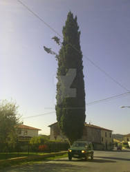 longtree
