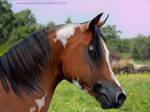 Hazy Pasture By Horserider09