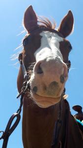 Horserider09's Profile Picture