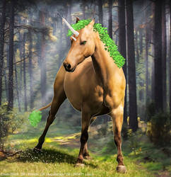 Forest Unicorn HEE by Horserider09